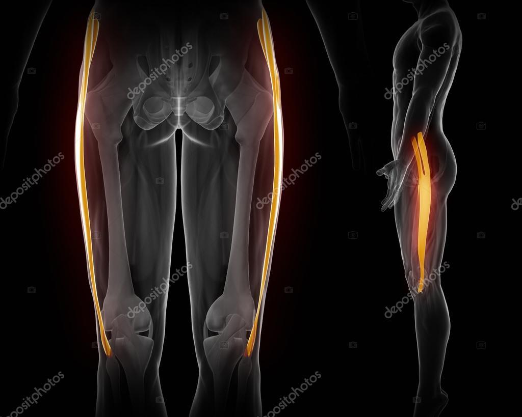 Mapa de anatomía de los músculos — Fotos de Stock © CLIPAREA #88087790
