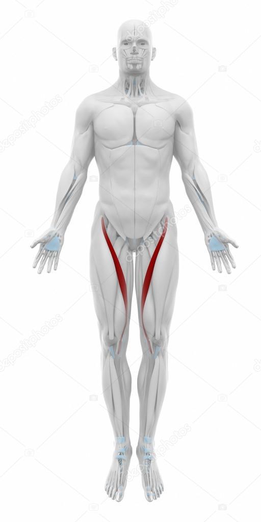 Muskeln Anatomie Karte — Stockfoto © CLIPAREA #88088110