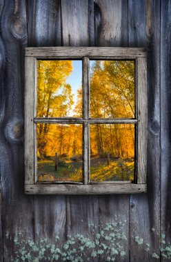 Fall window design