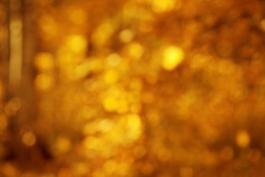 Autumn, fall background. Gold abstract bokeh defocused lights bl