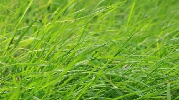 Foukání zelené trávy