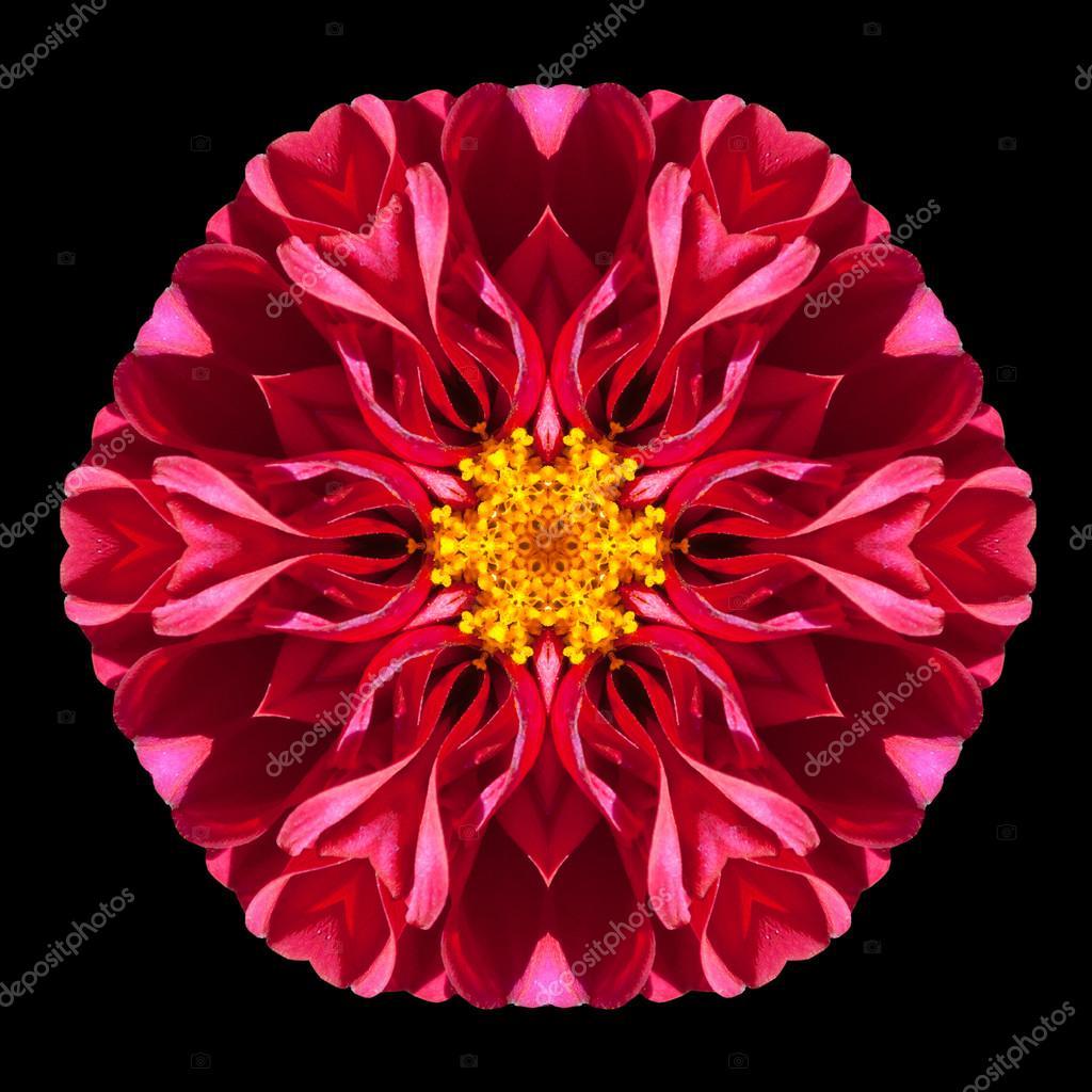 Caleidoscopio Di Mandala Del Fiore Rosso Isolato Sul Nero Foto