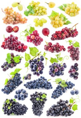 Collections of Ripe grapes