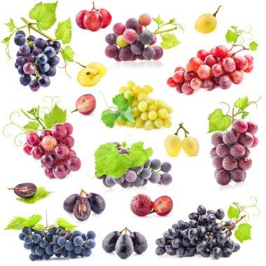 """Картина, постер, плакат, фотообои """"коллекция винограда """", артикул 66745529"""