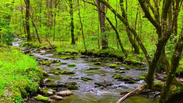 Lesní potok přes moss zahrnuty skály
