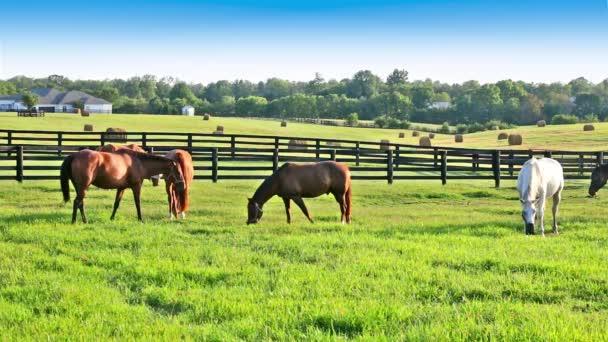 Koně pasoucí se na zelených pastvinách koňská farma. Země letní krajina.