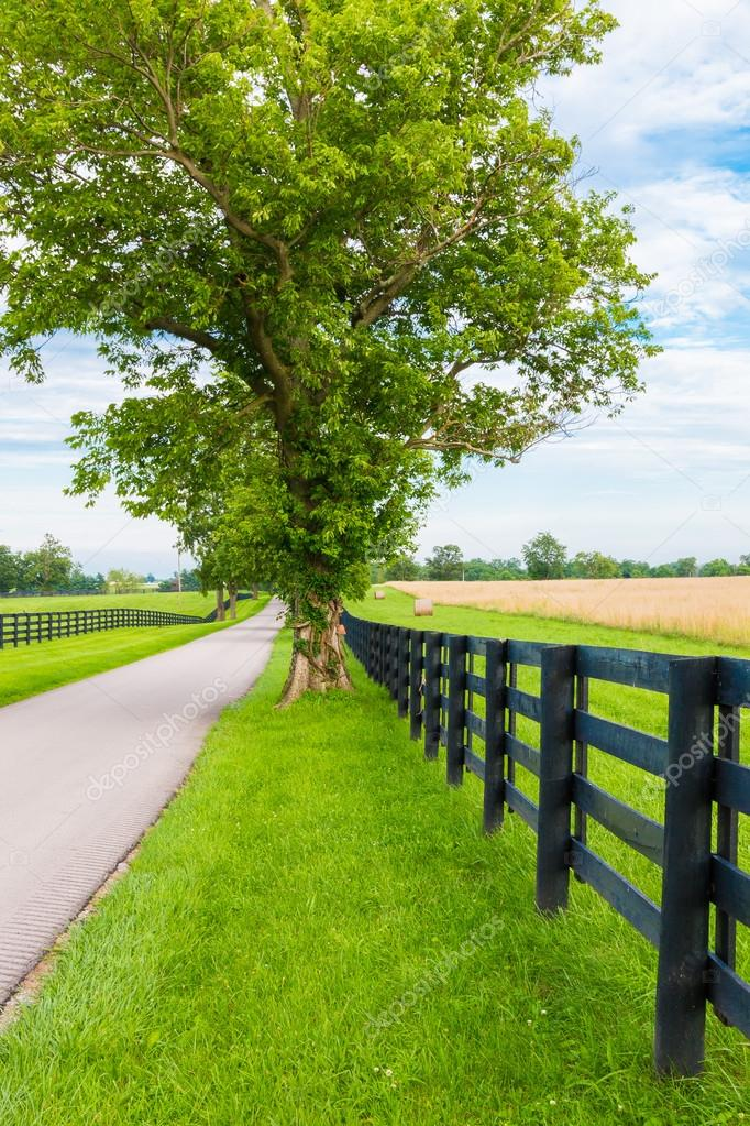 Country road surrounded the horse farms.