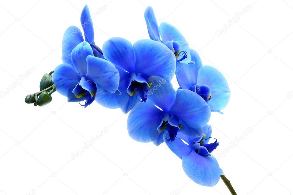 Resultado de imagen para flor azul