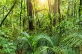 Una lussureggiante giungla tropicale verde