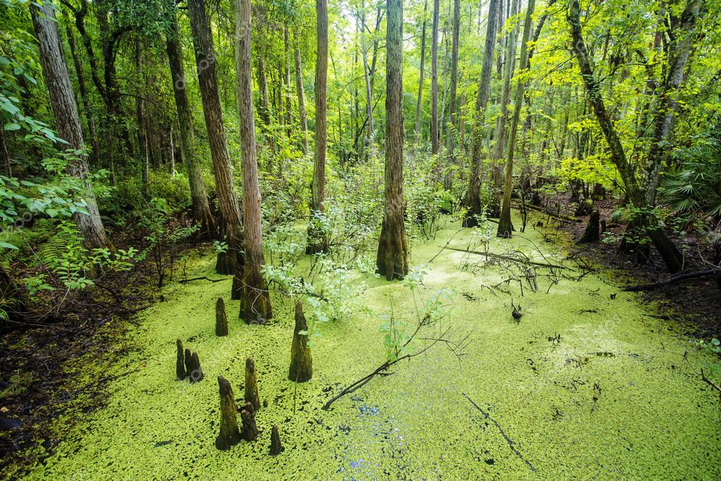 green swamp and tropical forest