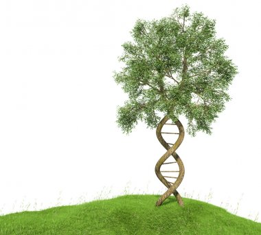 DNA shaped tree with trunks forming the double helix