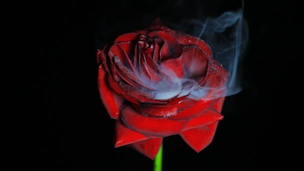 felvétel virág füst sötét háttér