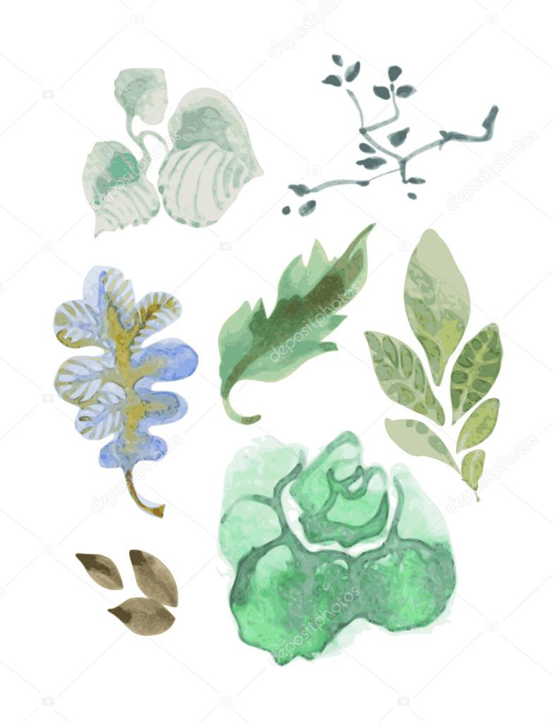 Set of watercolor leaves. Vectorized image with watercolor.