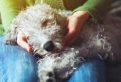 roztomilý spící pes