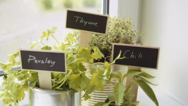 Hrnec s čerstvými bylinkami s názvy