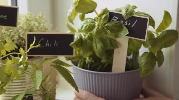 Hrnec s čerstvými bylinkami s tabulí