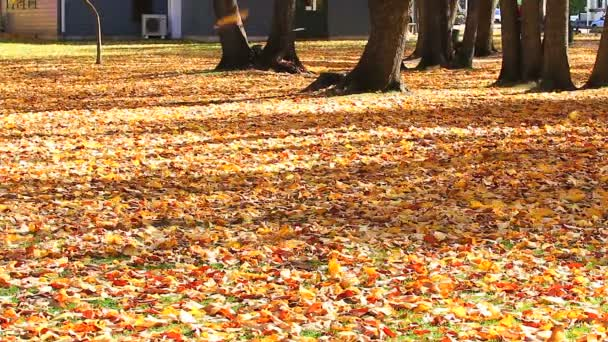 Falling autumn leaves in the wind