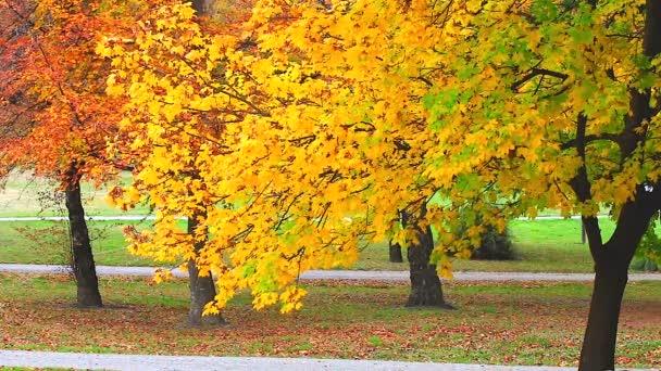 Podzimní červené javorové listy