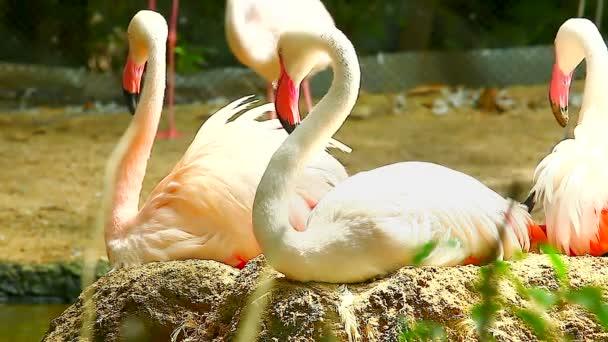 Group of Flamingos on lake