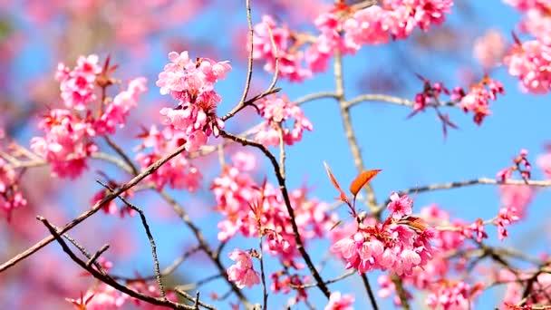 Rózsaszín virágok a szélben