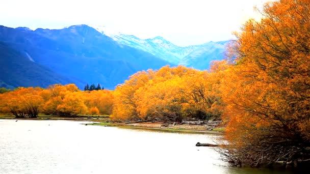 Őszi szezonális őszi levelek, a fák