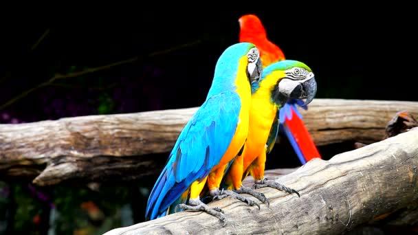 Modrá a žlutá Macaw na stromě