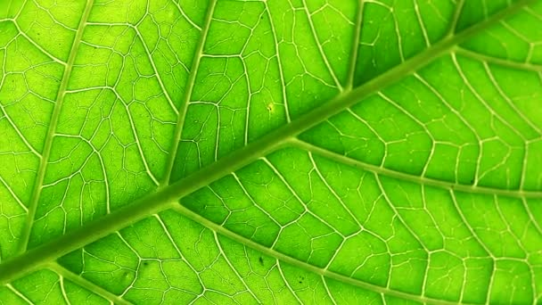 Green leaf moves on the wind