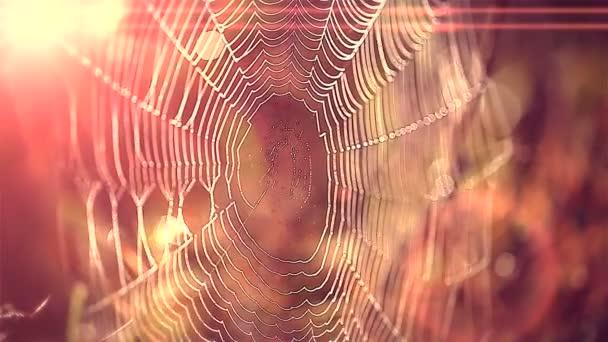 Pavoučí hedvábí a vodní kapky