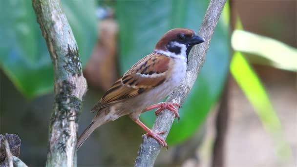 Malý pták sedí na stromě