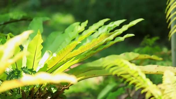Zelené kapradí pramení