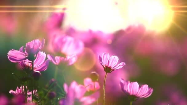 Pole růžových květin