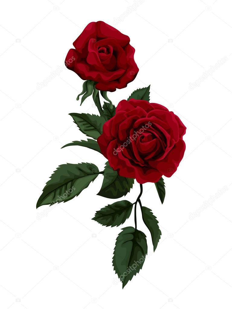 Red rose isolated on white. Perfect for background greeting cards and invitations of the wedding, birthday, Valentine's Day, Mother's Day.