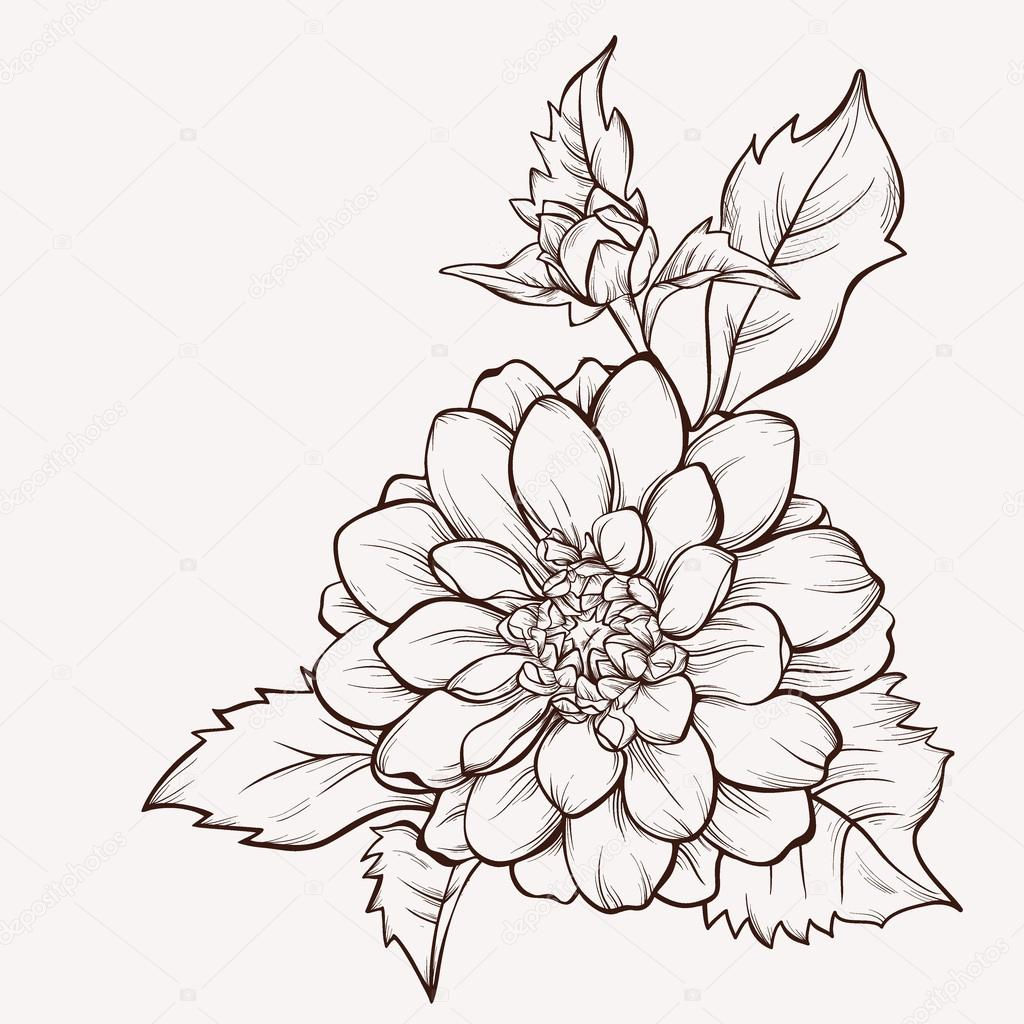 Vector flower isolated on white background. Hand-drawn dahlia flower.