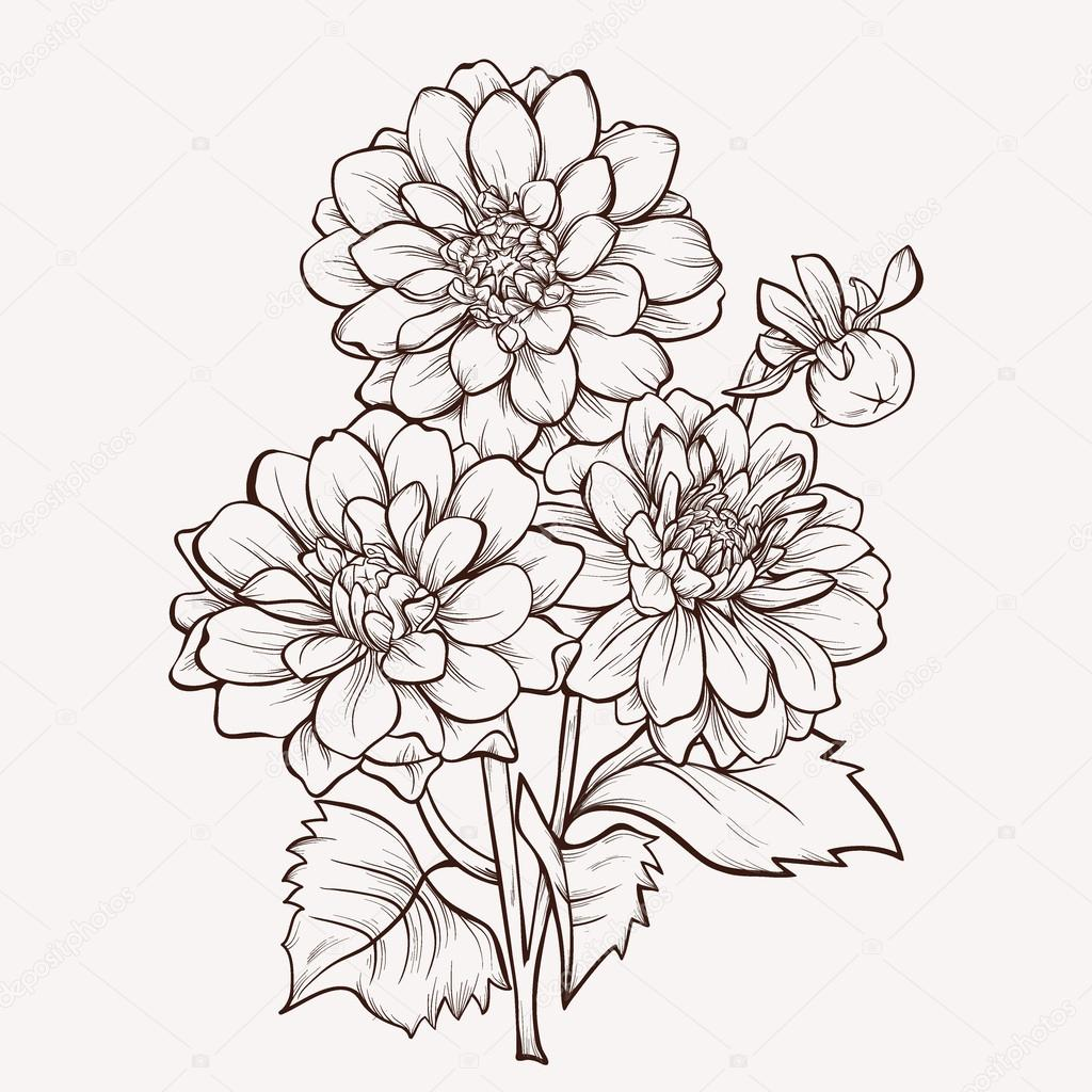 Dahlia Flower Line Drawing : Vector flower isolated on white background hand drawn