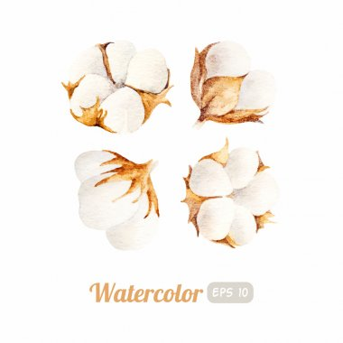 Set of Watercolor cotton flowers
