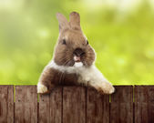 Fotografie Cute easter bunny on wooden fence