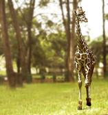 Giraffa che cammina sul campo di erba verde