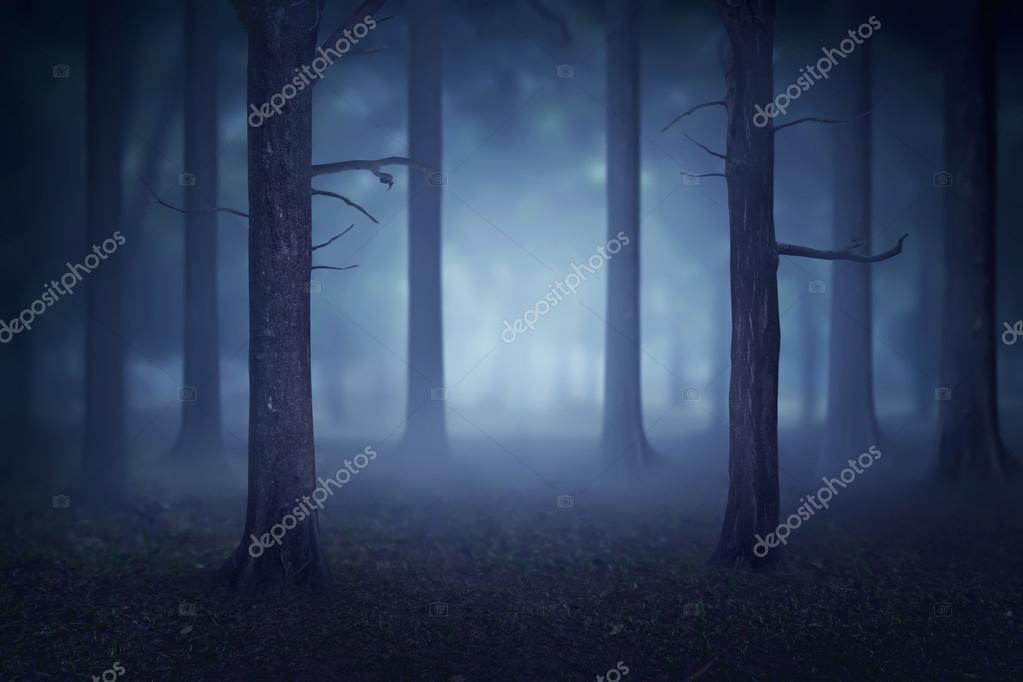 creepy foggy forest