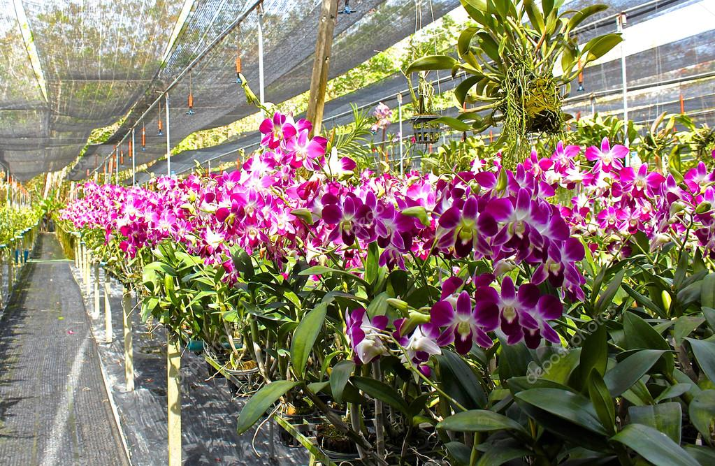 Magnifique jardin d\'orchidées dans une serre en fleurs ...