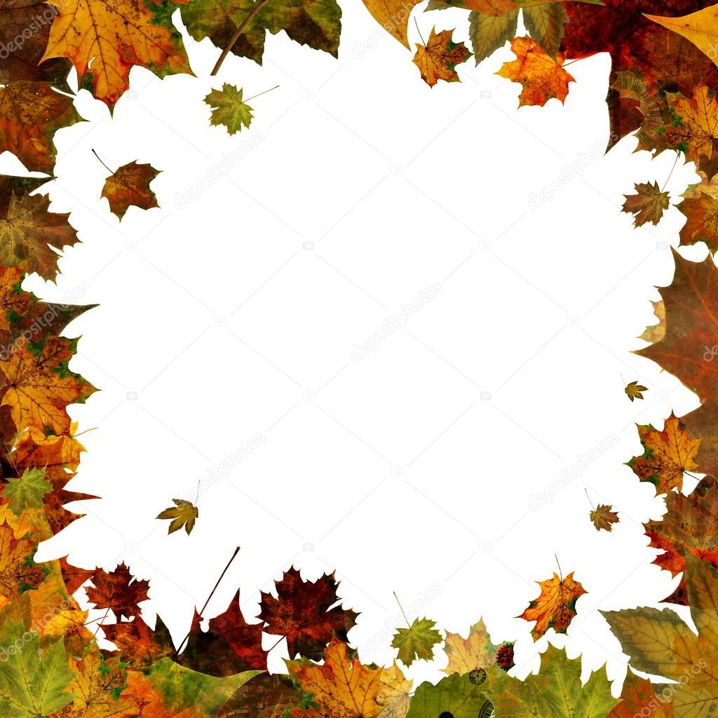 Type Of Tree Folhas De Outono Borda Frame Quadrado Isolada No Branco