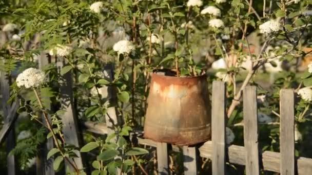 Poupata keře bílých květů