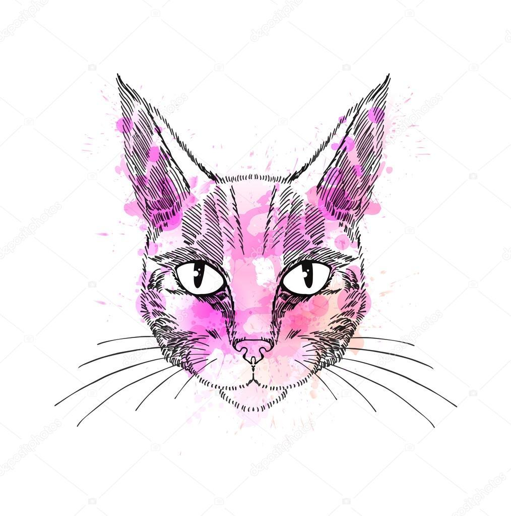 katzen ausmalbilder warrior cats  zeichnen und färben