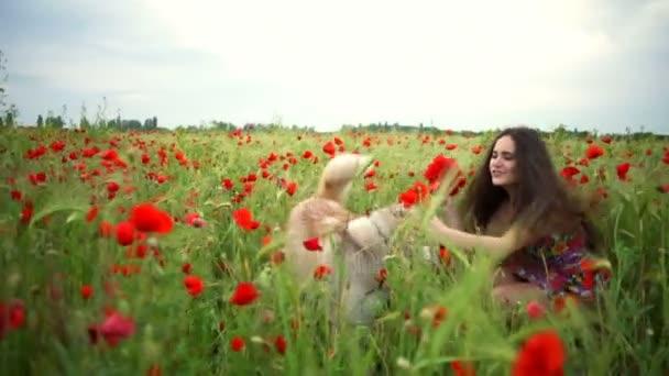 boldog fiatal női és husky kutya pipacs mező lassítva