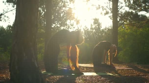 Girls practicing yoga at sunset in forest Ushtrasana Slow motion