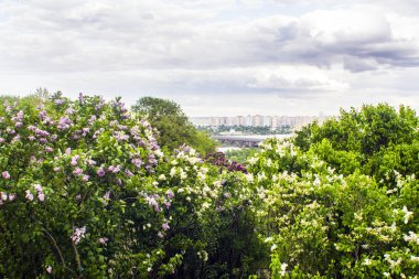Panorama of the city of Kiev. Ukraine. View of the monastery Vydubitsky, left bank of the Dnieper River and the modern part of town. Kyiv.