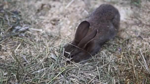 kleine flauschige Home dekorative Kaninchen mit grauem und braunem Fell