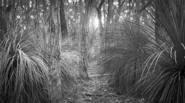 Golden Forest Black and White