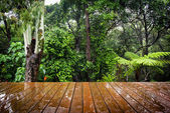 Holzbrettern und Wald