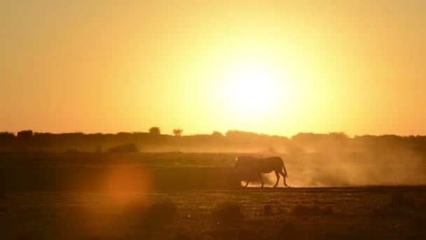 Afrika slunce Zebra
