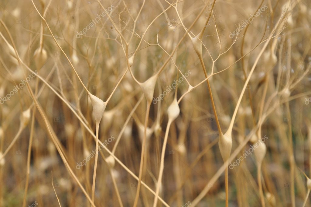 dry stalk of the plant